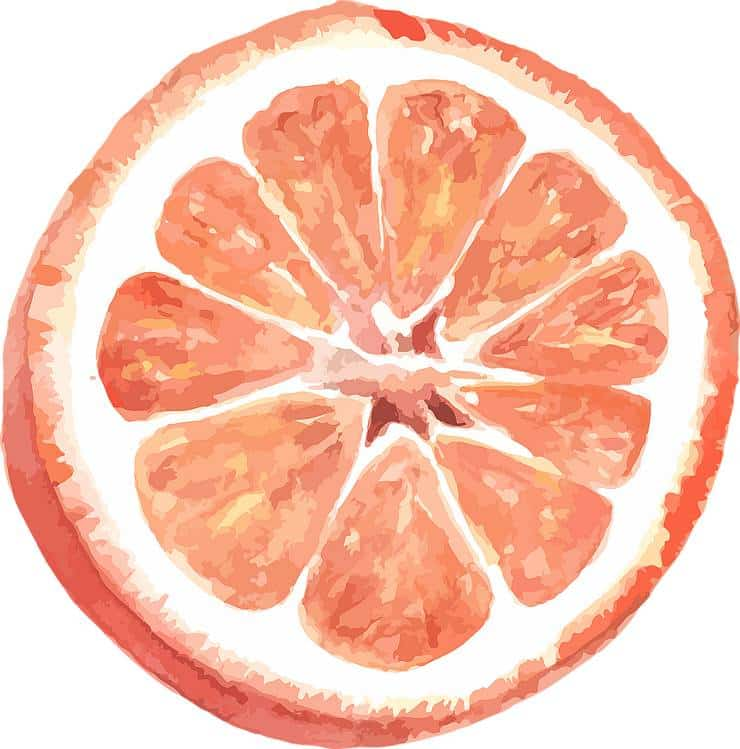 citrus graphic